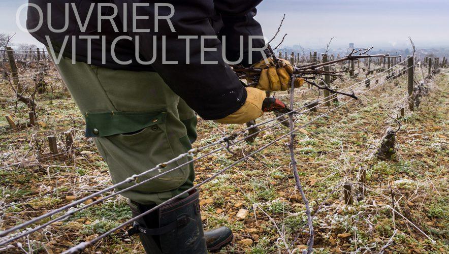 talents-nature-ouvrier-viticulteur